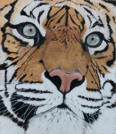 Sumatran Tiger by Judith Mackay