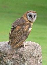 Newent-Birds-Prey-Visit-2