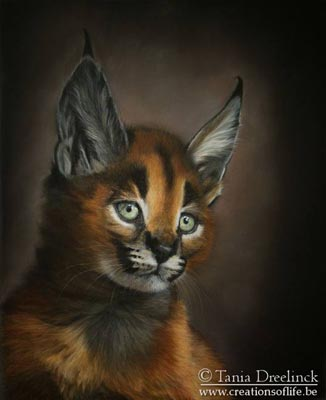 'Caracal' by Tania Dreelinck