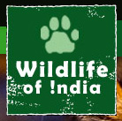 Wildlife of India Link to Website
