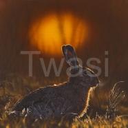 'Sunset Glow' by Andrea Brun brunan3a@libero.it