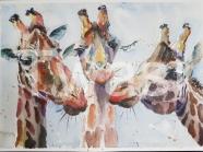 Ann- Hunt - Giraffes MBE, M.R.C.V.S., B.V.M.S ann@easterton.com