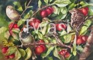Christina Hopkinson - Family Tree harmonyart@hotmail.co.uk http://www.harmonyart.co.uk/