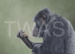 victoria.manser@yahoo.co.uk www.victoriamanser-art.co.uk