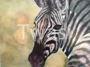 Diane Marshal - Zebra diannemarshall@hotmail.com