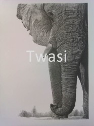 Paul Kettle-Buchanan - Elephant p.kettlebuchanan@btinternet.com