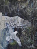 Geoff Jennings - Fulmars nesting thegeoffjennings@googlemail.com http://www.geoffjennings.co.uk/