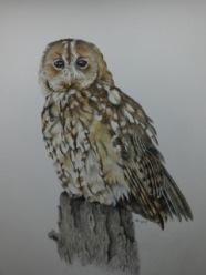 David Knight Owl divadknight@sky.com