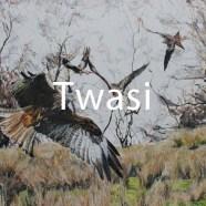 Immy Hathaway - Birds of prey immyh04@hotmail.com