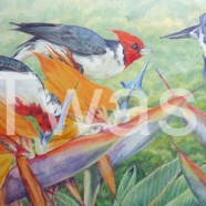 'Cardinals and Strilitzia' by Jackie Cox jcox953@btinternet.com http://sindencox-art.co.uk/jackie.html