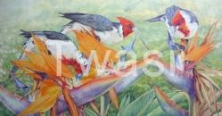 'Cardinals and Strilitzia' by Jackie Cox jcox953@btinternet.com http://sindencox-art.co.uk/jackie.html
