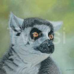 Jacqueline Edmonds - 'Lemur' edmondsart@outlook.com http://www.jacquelineedmondsart.co.uk/