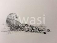 Jenny Musker - Cheetah jenny@jennymusker.co.uk