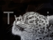 Jill Mitchell - 'White Magic' Snow Leopard jillmitchell.art@gmail.com https://jillmitchellwildlifeart.weebly.com/