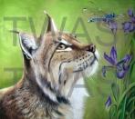 Jill Tisbury - Lynx Hawker info@jilltisbury.co.uk http://www.jilltisbury.co.uk/