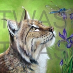 Jill Tisbury - Lynx Hawker info@jilltisbury.co.uk http://www.jilltisbury.co.uk/
