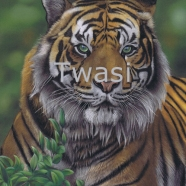 'Eye of the Tiger' by Karie Ann Cooper karieanncooper@aol.com https://www.artbykarie-ann.co.uk/