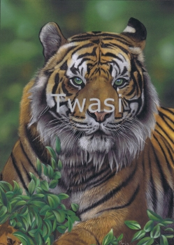 'Eye of the Tiger' by Karie Ann Cooper karieanncooper@aol.com https://www.artbykarie-ann.co.uk/