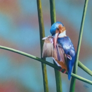 'Kingfishers Perch' by Cheryl Day Cherylday955@gmail.com http://www.cheryldayart.com
