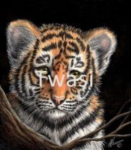 Linda Hampson - Tiger cub linda.hampson702@btinternet.com