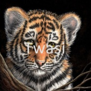 Linda Hampson - Tiger cub linda.hampson702@btinternet.com