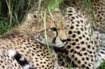 Michael Owens - Cheetahs michaelowens002@gmail.com