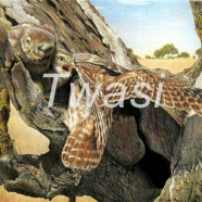 'The Fizzy and the Still' by Nick Day biirdmanday@yahoo.com http://www.nick-day-wildlife-artist.co.uk/