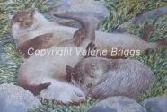 'Otter Siesta' by Valerie Briggs v.briggs746@btinternet.com http://www.valeriebriggs.co.uk
