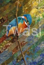 Pat Kitching - Kingfisher kitchingpat@gmail.com