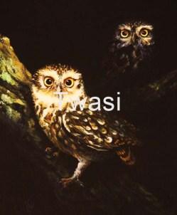 Paul Vann - Little Owls paul.vann98@gmail.com http://paulvann.artweb.com/
