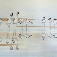 John Horton - Preening Avocets contact@johnhorton.co.uk