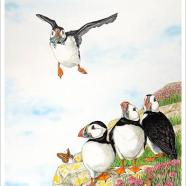 Tracey Anne Sitch - Puffins traceyannesitch@sky.com http://www.traceyannesitch.co.uk/