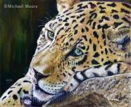 Michael Moore - Jaguar mikemoore@artistuk.me.uk http://www.artistuk.me.uk/