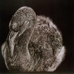 Jane Holford-Atkin - Pretty Flamingo nw007a5680@blueyonder.co.uk http://www.janeholfordatkin.co.uk/