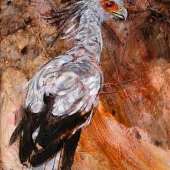Chris Saunderson - Secretary Bird c.b.saunderson@btinternet.com