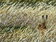 'Hare in the Hayfield' by Sarais Crawshaw saraiscrawshaw@aol.com http://saraiscrawshawart.com/
