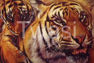 Stan Kaminski - Tiger and Cub info@stankaminski.com http://www.stankaminski.com/?doing_wp_cron=1522781652.1139950752258300781250