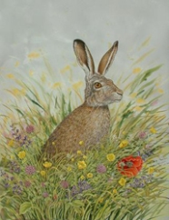 Eleanor Ludgate - The hare and the poppy eleanor.ludgate@yahoo.co.uk