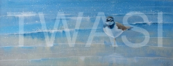 'Ringed Plover' by Denise Coble