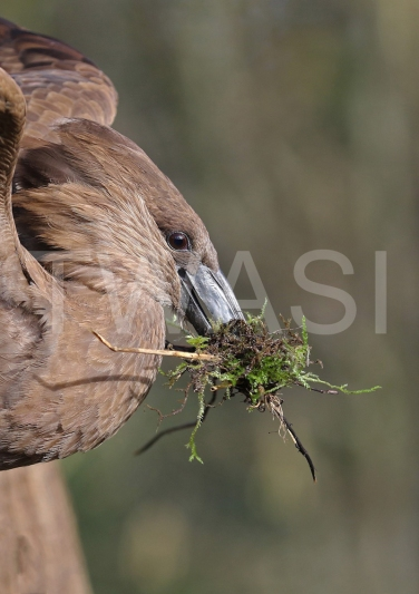 Hammer Kop Nest by Philippa SmithGold Citation Award for Photography 2018