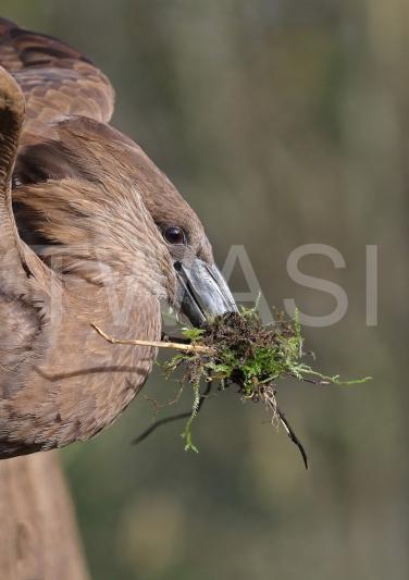 Hammer Kop Nest by Philippa SmithGold Citation Award for Photography 2018