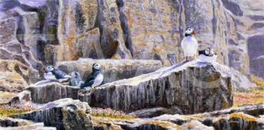 Puffin Rocks by Sarais Crawshaw Silver Citation Award 2018
