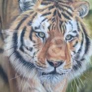 Tiger by Susan Baxter