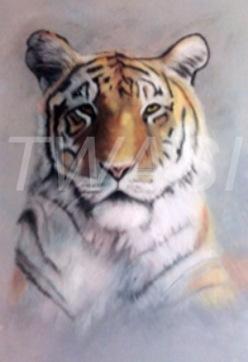 "'Tiger"" by Leanne Byrom leanne@animal-pastels.com"