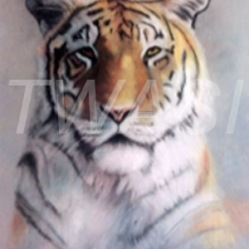 "'Tiger"" by Leanne Byrom leanne@animal-pastels.com"