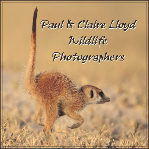 Paul & Claire Lloyd Wildlife Photographers