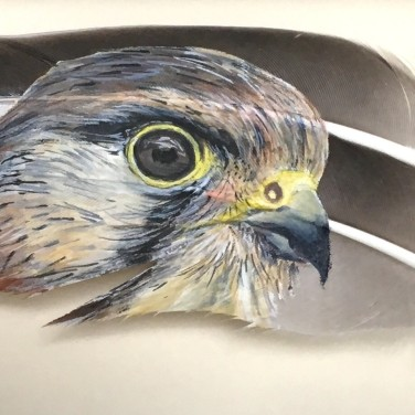 Kestrel by Baykaa-Murray Highly Commended Award 2018