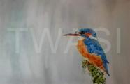Karen Markham - Kingfisher karenmarkham@live.com