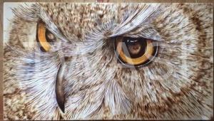 Chris Ferris - Owl