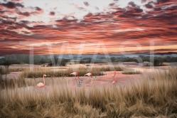 Flamingos by Dr Martin Raskovsky